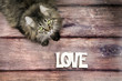 Maine coon cat on wood floor with love word