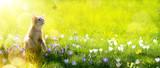 Sztuki szczęśliwy odtwarzanie Kot na tle zielony wiosny