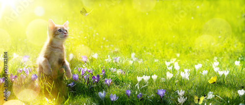 art happy playing Cat on green spring background
