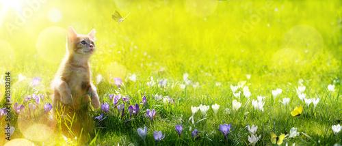 sztuka szczęśliwy gra Kot na tle zielonego wiosny