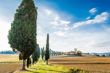 The plant and the vineyard in the beautiful countryside of Lucignano in Tuscany