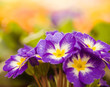 colorful spring flowers at abstract floral background