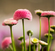 pink spring flowers at abstract background