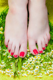 """Beautiful female feet with red pedicure on the background of  103214820,Bouquet of red and purple tulips on wooden background. Top view"""""""