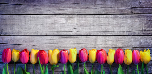Tulips in a row on the Vintage Plank - Spring Background