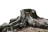 Old weathered tree stump - 103219245