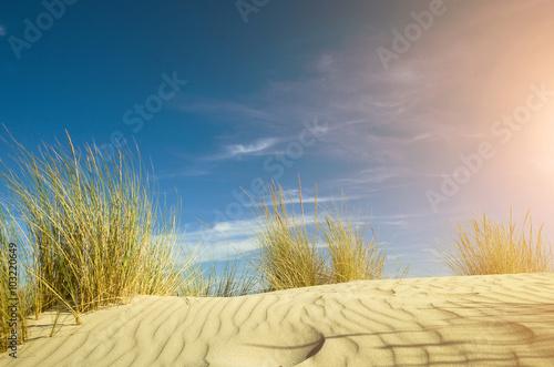 Panel Szklany juncos sobre una duna de arena