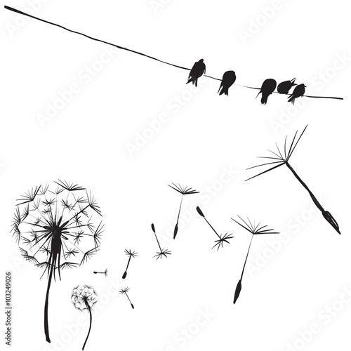 silhouettes of birds and flowers dandelion, birds on wires, vect © tanshy