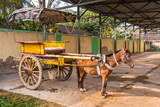 Traditional horse cart in India