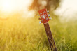 blurry and soft focus of guitar on grass at sunset