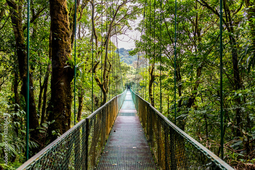 Fototapeta Hanging Bridges in Cloudforest - Monteverde, Costa Rica