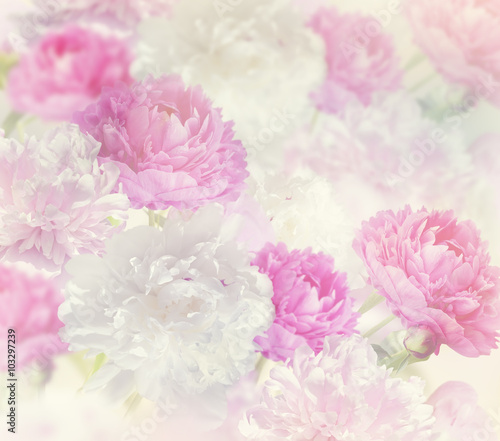 Fototapeta Peony Flowers Background