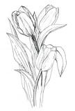Tulips - 103338838