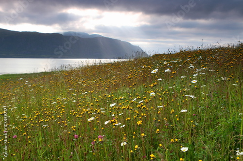 Poster Beautiful summer meadow