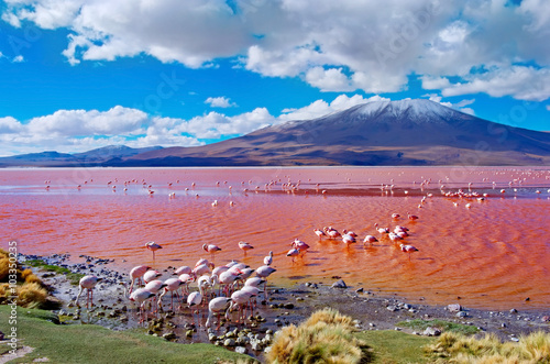 Billede Flamingoes in Laguna Colorada ,  Bolivia