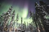 Beautiful picture of massive multicoloured vibrant Aurora Borealis, Aurora Polaris, also know as Northern Lights in the night sky over winter Lapland landscape