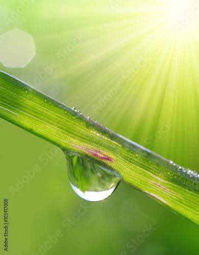 swieza-trawa-z-rosa-opuszcza-zblizenie-nature-backgro