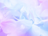 Fototapety Flower background 17