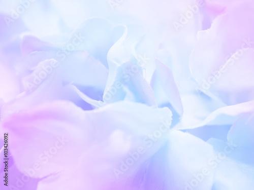 Fototapeta Flower background 17