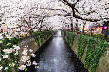 Meguro Kanal in Tokyo während der Kirschblüte im Frühling