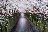 Nakameguro Kanal in Tokio während der Kirschblüte im Frühling