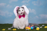 cat in the suit bunny celebrates Easter