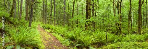 Path through lush rainforest, Columbia River Gorge, Oregon, USA - 103601850