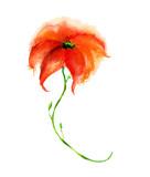 красный цветок акварелью