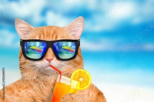 Cat wearing sunglasses relaxing in the sea background Poster