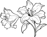 Lily flowers. Blooming lily. Card or floral background with blooming lilies flowers. 