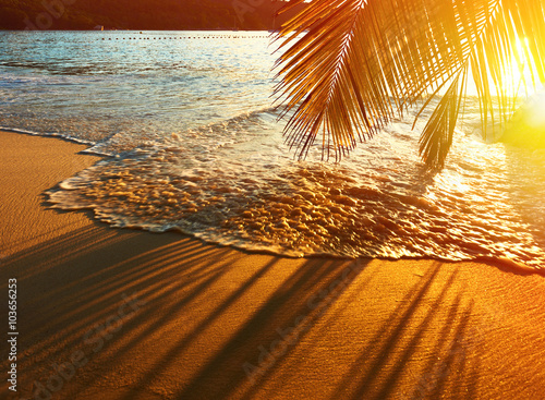 Plagát Beautiful sunset at Seychelles beach with palm tree shadow