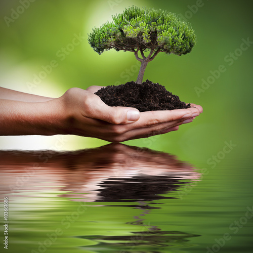 Fototapeta tree in hands with reflection in water