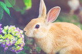 Rabbit in front of a hydrangea bush