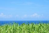 海と空とさとうきび畑