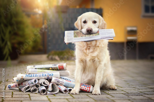 Fotografiet Hund hält Zeitung im Maul