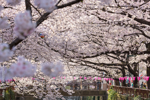 Fototapeta TOKYO, JAPAN - March 30 : Tourist unidentified taking picture with Cherry blossom flower taken March 30, 2015 in Naga Meguro area, Tokyo. This area is popular sakura spot in Tokyo with beautiful canal