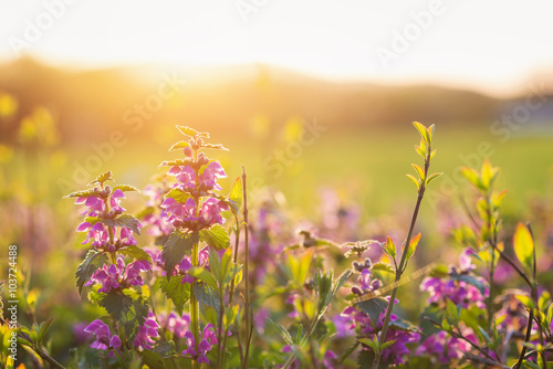 Foto Spatwand Oranje Summer meadow with colorful flowers. Sunny nature, sunset
