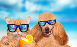 Cat and dog wearing sunglasses relaxing in the sea background.