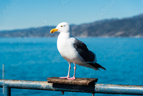 Fotobehang Zwaan seagull sitting on a rail on santa monica pier