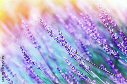 tlo-kwiat-lawendy