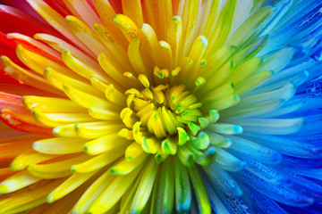 Colorful rainbow flower brackground © Leigh Prather
