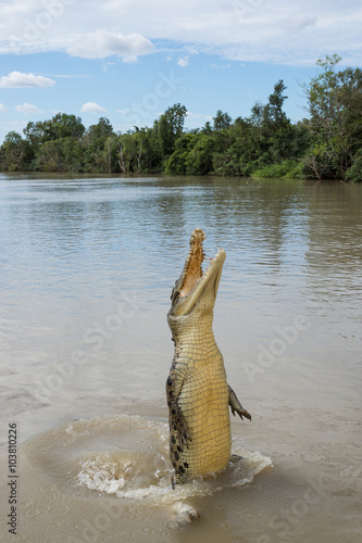 Crocodile jumping high out of river Poster