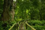 Fototapety Selva asiática
