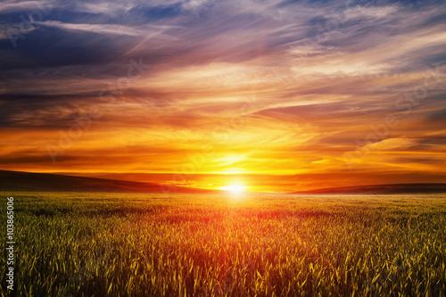 Fototapeta Green Field and Beautiful Sunset