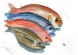 Fish - 103898653