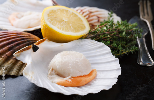 Canvastavla Raw fresh scallops in the shell with  lemon