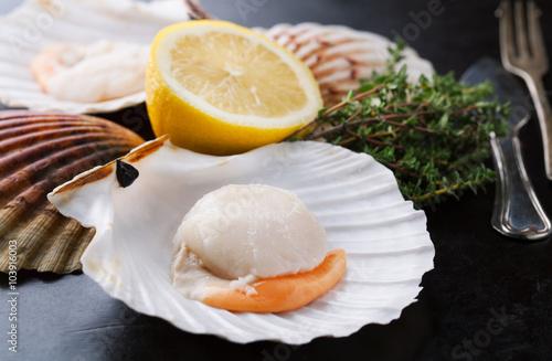 Bilden på canvas Raw fresh scallops in the shell with  lemon