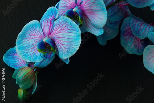 Bukiet fioletowych orchidei