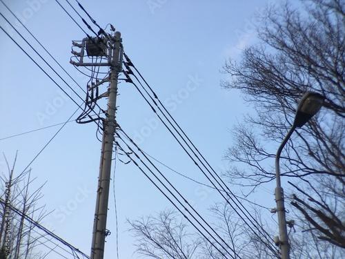 電柱と街路樹
