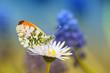 Zapach nektaru